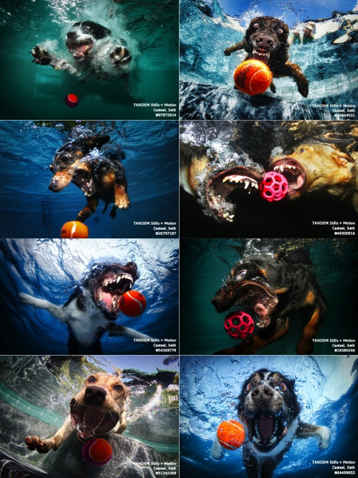Happy Friday Terrifying Images Of Dogs Diving Underwater