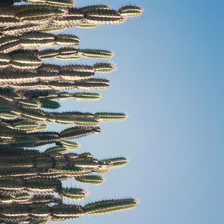 The Cactus Trend